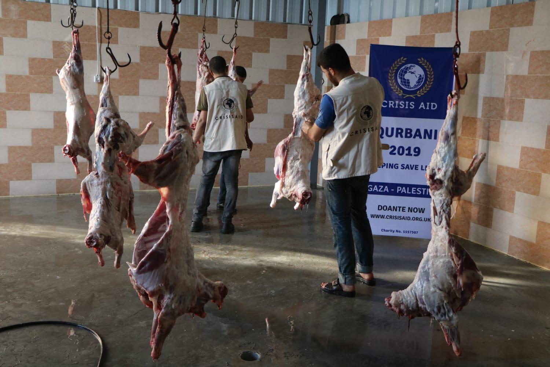 Qurbani Gaza 2019